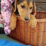 Pidzy, Chiot à adopter