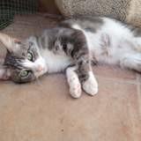 Lira, Chat à adopter