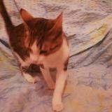 Mimi, Chaton à adopter