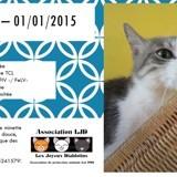 Pétunia, Chat à adopter