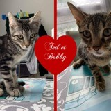 Ted et bobby, Chaton européen à adopter