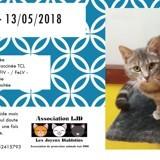 Zélie, Chat à adopter