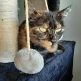 Anepa, Chat à adopter