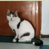 Fermín, Chat à adopter