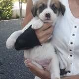 Lola, Chiot à adopter
