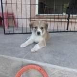 Malou, Chiot à adopter
