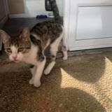 Choukette, Chaton à adopter