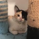 Monday (réservée), Chaton à adopter