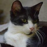 Outchimata, Chat à adopter