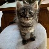 Baba, Chaton à adopter
