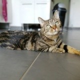 Chipie, Chat à adopter