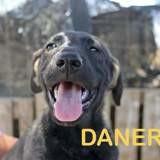 Danerys, Chiot à adopter