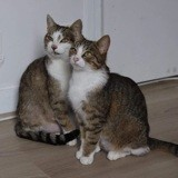 Sissi & nevada, Chat à adopter