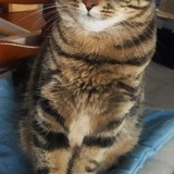 Queen, Chat à adopter