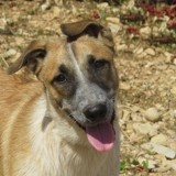 Pepino, Chiot à adopter