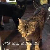 Noisette et petit coeur, Chat à adopter