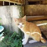 Patchou, Chaton à adopter