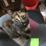 Holly, Chaton à adopter