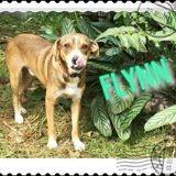 Flynn, Chien à adopter