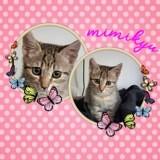 Mimikyu, Chaton à adopter
