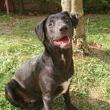 Pika, très jeune femelle croisée créole, Chiot à adopter