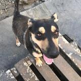 Berik, Chien à adopter