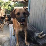 Zag, Chien à adopter