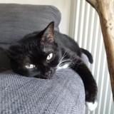 Libellule, Chat à adopter