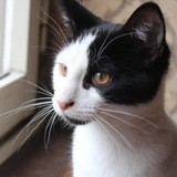 Perceval, Chaton à adopter