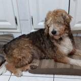 Tilou, Chien à adopter