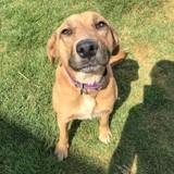 Frida, Chien à adopter