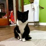 Mélusine, Chat à adopter