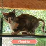 Finette, Chat à adopter