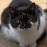Orbita, Chat à adopter