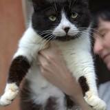 Lapoushka, Chat à adopter