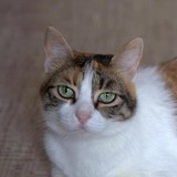 Lola, Chat à adopter