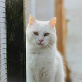 Ulysse, Chat à adopter