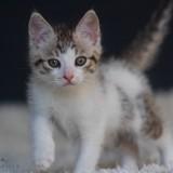 Arès, Chaton à adopter