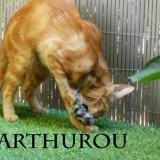 Arthurou chasse les souris, Chat à adopter