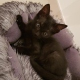 Nala, Chaton à adopter