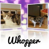 Whooper, Chaton à adopter