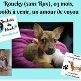 Roucky, Chiot à adopter