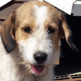 Totoff, Chien à adopter