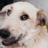 Hugo, Chien à adopter