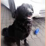 Blacky, Chien à adopter