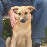 Linnika, Chiot à adopter