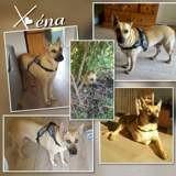 Xéna, Chien à adopter