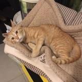 Mimo (réservé), Chaton à adopter