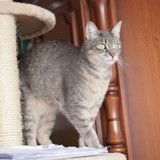 Noupie, Chat à adopter