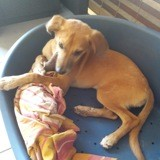 Harpy, Chiot à adopter